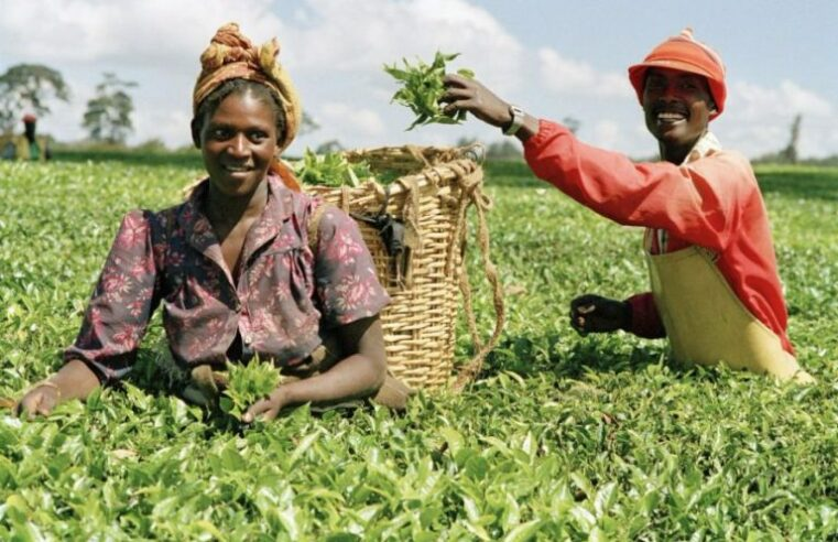 FAILURE TO FUND AND DEVELOP MODERN AGRIC SYSTEM FUELS INSECURITY AND ETHNIC AGITATION